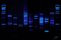 L'ADN prend des couleurs chez Helys : le courrier de la décoration